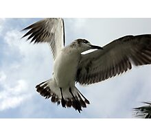 Dance of the Seagull Photographic Print