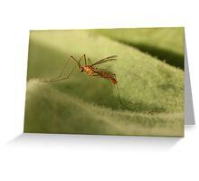 Crane Fly3 Greeting Card