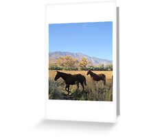For The Love Of Horses Greeting Card