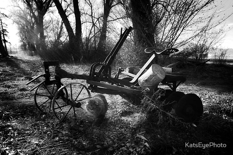 Day 70 by KatsEyePhoto