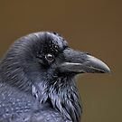 Raven Profile by Daniel  Parent