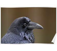 Raven Profile Poster
