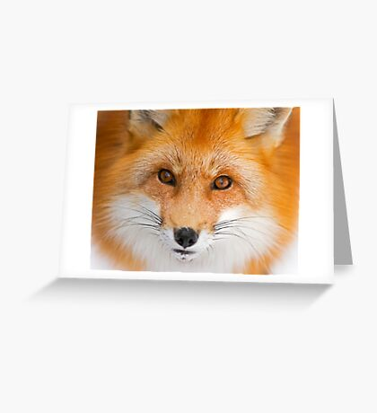 Fox Stare Greeting Card