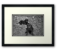 Really, We Did Not Do That!! Framed Print