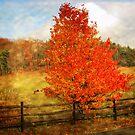 Glorious Fall In Pennsylvania by teresa731