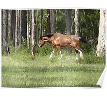 # 2 Farm  Horse Dungog NSW Poster