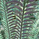Cycads by Jaee Pathak