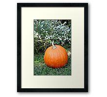 Season of Harvest 2 Framed Print