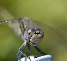 Smile Mr Dragonfly by Deborah Clearwater