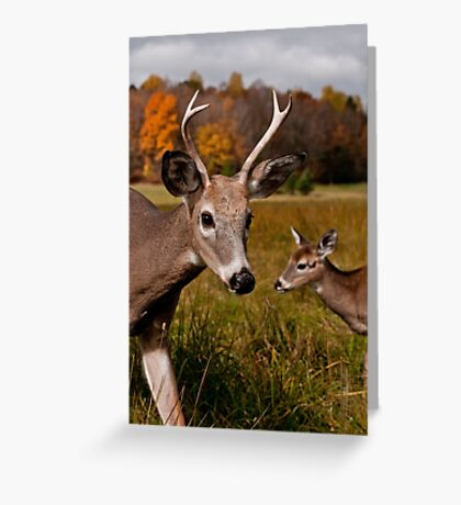 Deer - Photo Bomb Greeting Card