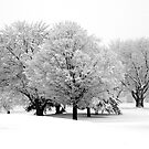 Winter White by KBritt