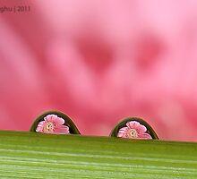 Daisy Flower through a droplet by Raghu Lakshminaarayanan