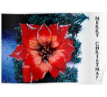 a flower for Christmas  Poster