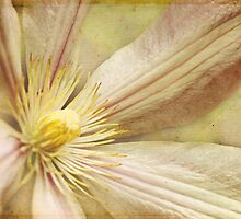 My Friend's Clematis by Margi