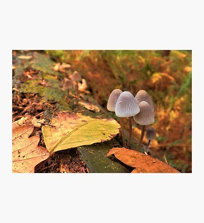 Woodland Autumn Photographic Print