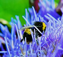 BumbleBee. by Will White Photography