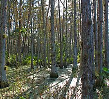 cypress swamp at dupuis by cliffordc1