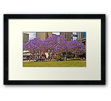 Jacarandas At The Quay Framed Print