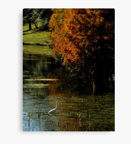 Fall In Florida ~ Part Two Canvas Print