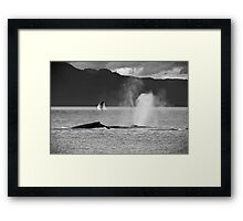 Whale Pod with Background Breach Framed Print