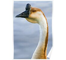 Silly Goose Poster