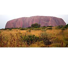 Field at Uluru Photographic Print