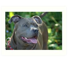 Blue pitbull Art Print