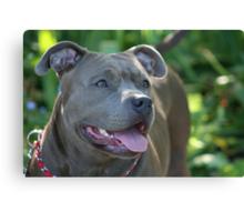 Blue pitbull Canvas Print