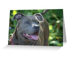 Blue pitbull Greeting Card