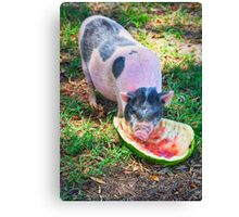 Pig with Watermelon Canvas Print