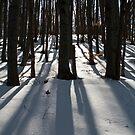 Winter forest by Vasil Popov