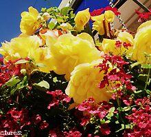 Flowers. by Beth Mackelden