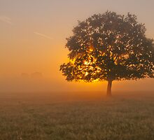 Misty Rays by imagejournal