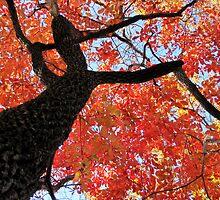 Black Gum Tree by Jean Gregory  Evans