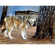 The Spirit of the Wolf Photographic Print