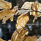 autumn leafs by Vasil Popov