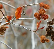 Alder Cones by © Betty E Duncan ~ Blue Mountain Blessings Photography