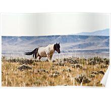 Wild Mustang of Wyoming Poster