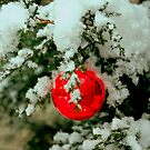 Little Red Ball by Grinch/R. Pross