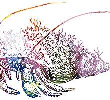 Hermit Crab by MordaxFurritus