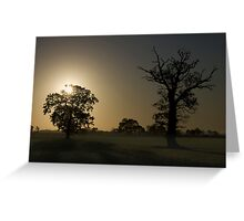 Sunrise, Trees And Shadows. Greeting Card