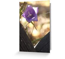 prying belle Greeting Card