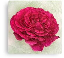 Pink Rose With Texture Canvas Print