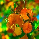 The Colors of Fall by Brenda Burnett