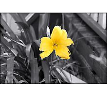 """ A TOUCH OF YELLOW "" Photographic Print"