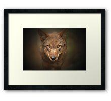 Wolf Stare Framed Print