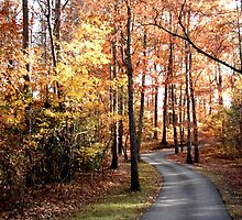 Dahlonega Fall Foliage by Rosie Brown