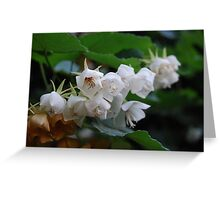 Cluster of Little White Flowers Greeting Card