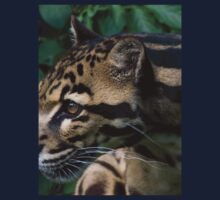 Furry Clouded Leopard