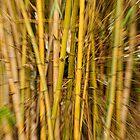 Crazy Bamboo by Julia Ott